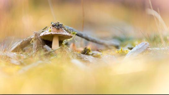 Herfst met paddestoelen