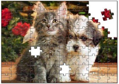 Kitten en Puppy