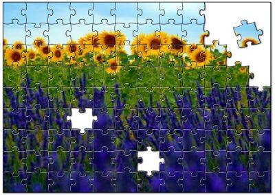 Zonnebloemen en lavendel