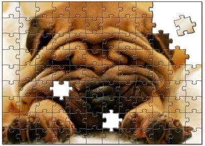 Shar-pie Dog