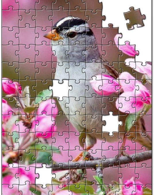Klein vogeltje op een takje vol met bloesem