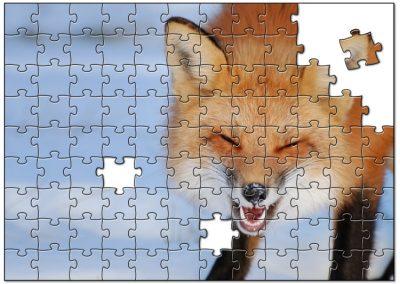 Lachende wolf