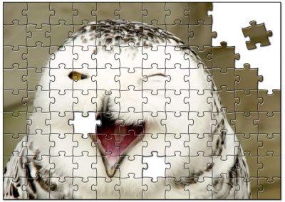 Uil met een knipoog en een lach