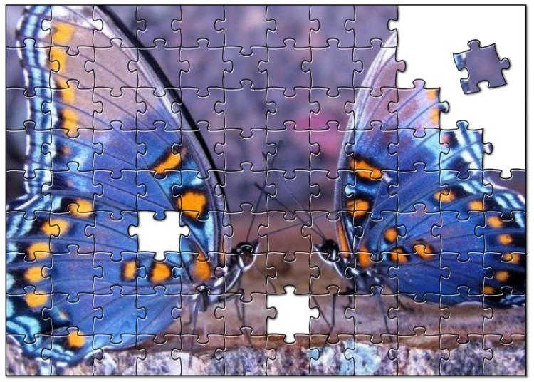 Twee adembenemende vlinders