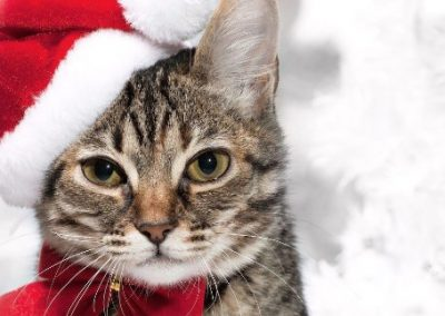 Kat met een Kerstmuts op