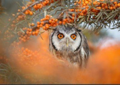 Schitterende oranje ogen