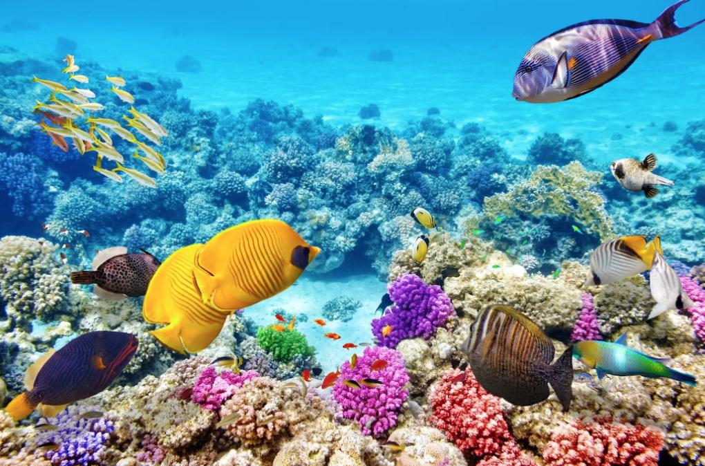Great-barrier-reef, Australië