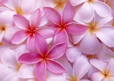 Mooie roze bloemetjes